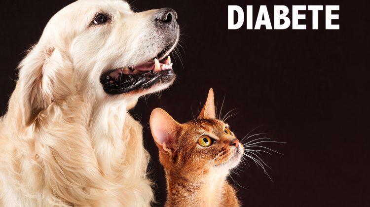 diabete del cane e del gatto