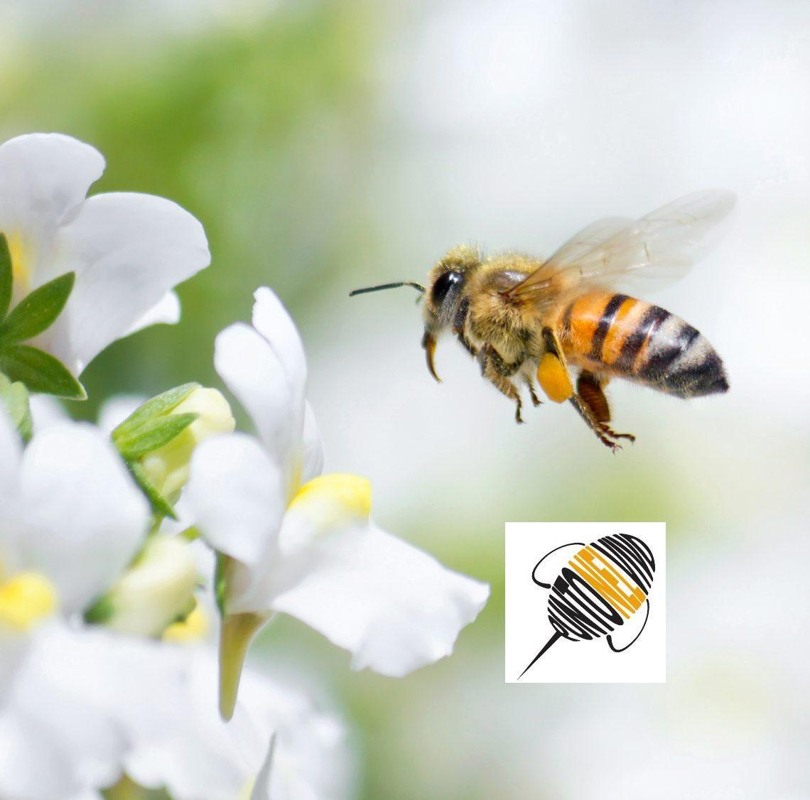 punto nel vivo - ape